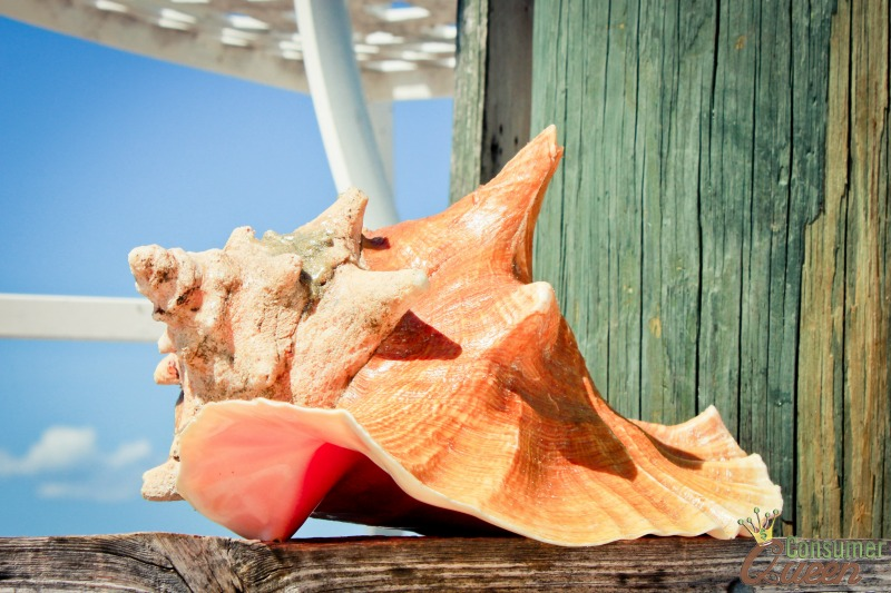 Conch Shell