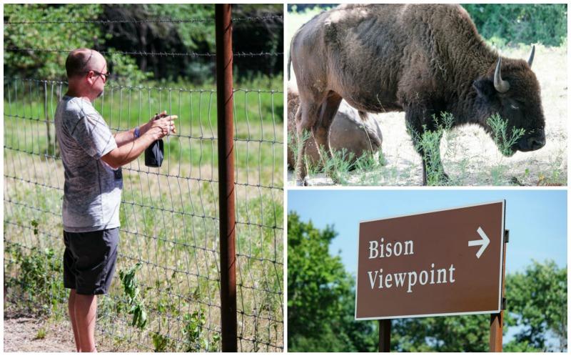 Bison View Point Sulphur