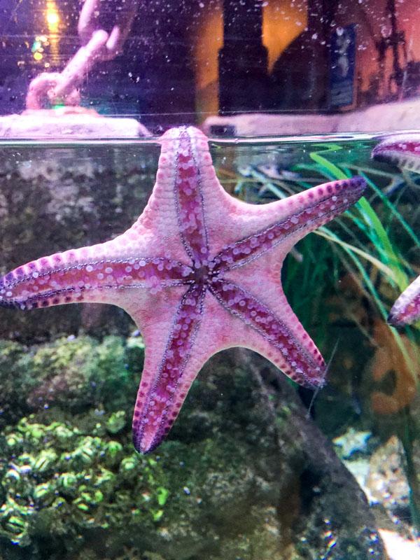 sea life Grapevine