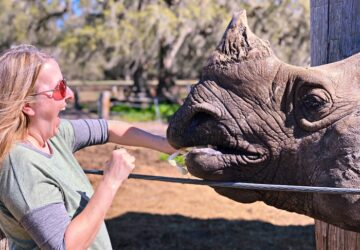feed rhinos - dog friendly orlando