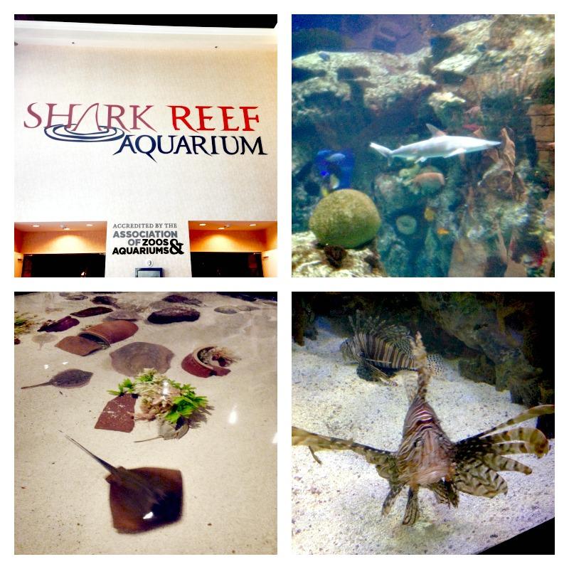 Aria_Shark_reef
