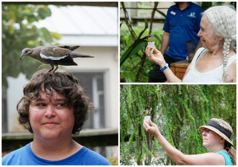 Bird Sanctuary Collage - Western Caribbean