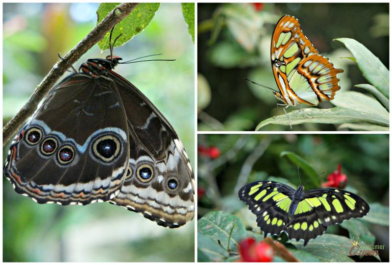 Blue River Butterflies