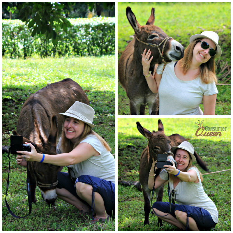 Blue River Donkey Collage