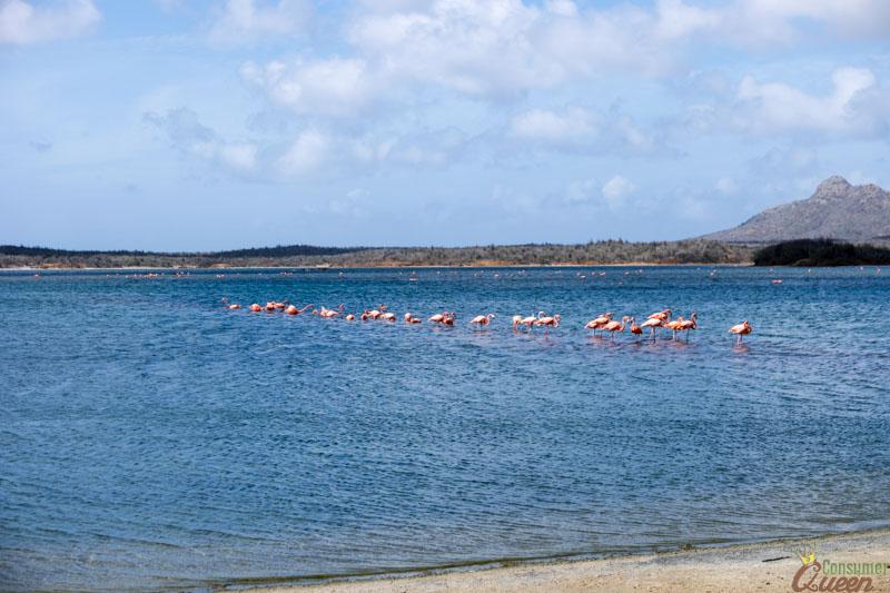 Bonaire Flamingos (1 of 1)