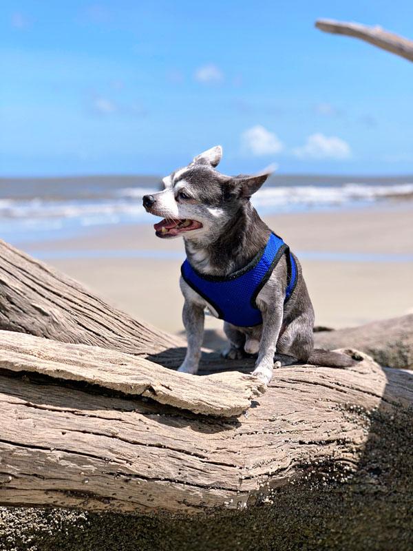 Boomer on the beach