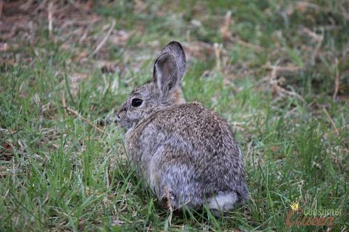 Bunny at KOA