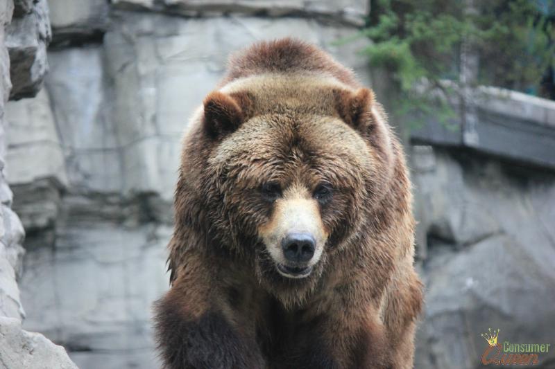 Central Park Zoo Bear