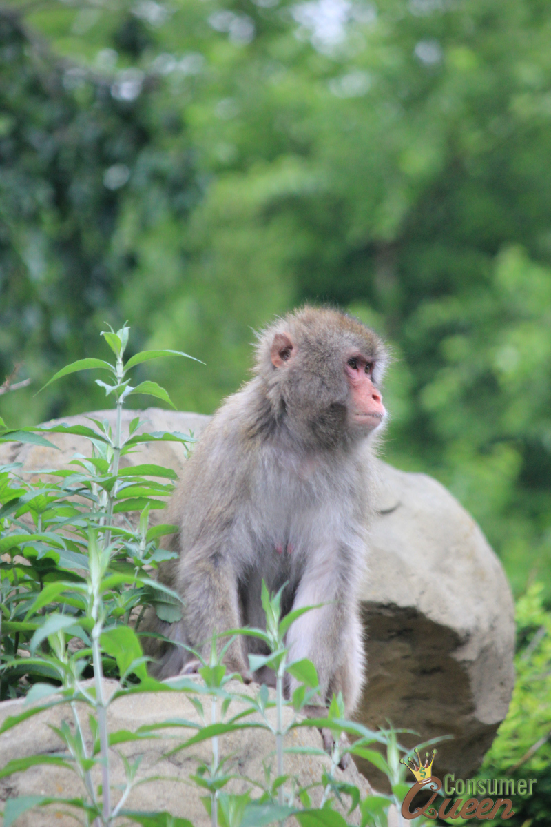 Central Park Zoo Monkey