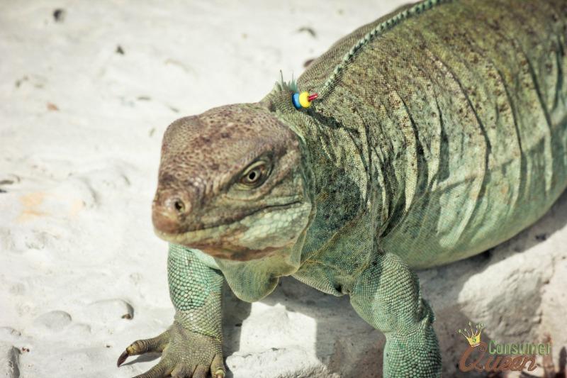 Iguana Island 2