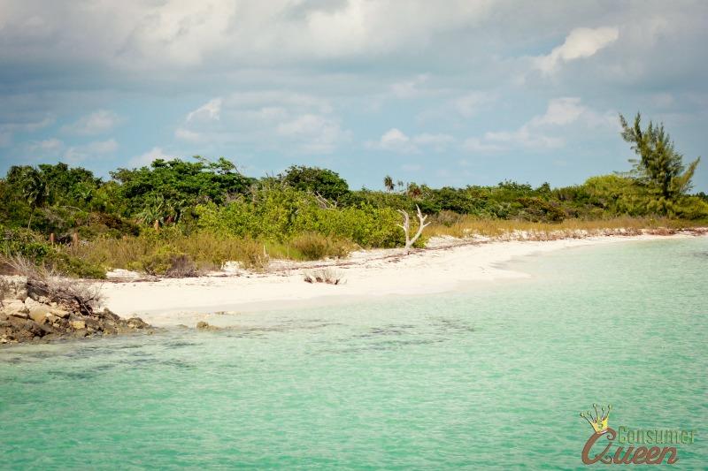 Iguana Island 3