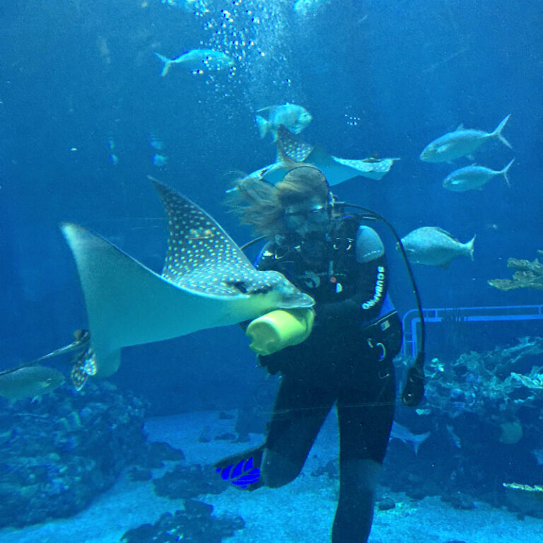 EPCOT's Living Seas and Dolphin Research