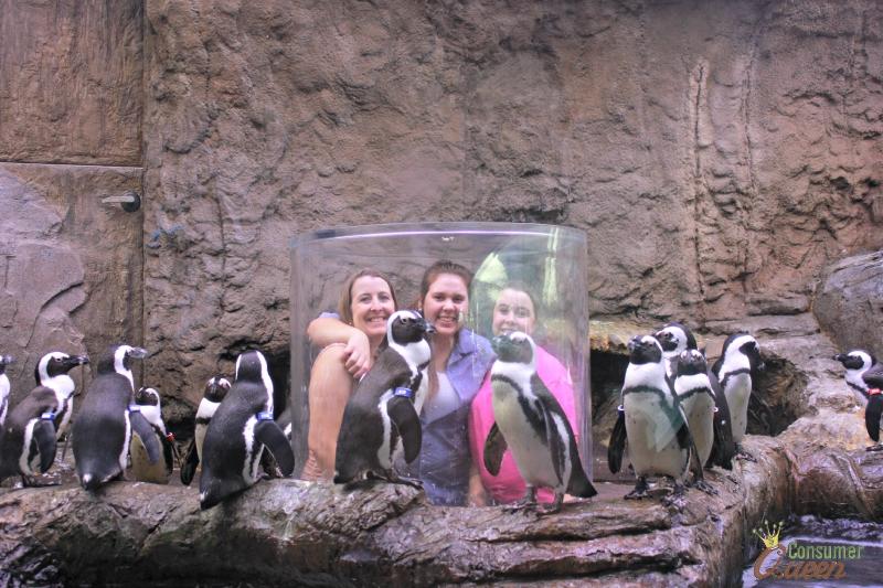 Ripley's Aquarium Gatlinburg