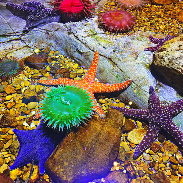 Sea Life Touch Tank
