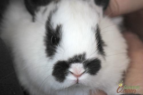 baby bunny -Old Macdonald Had a Farm