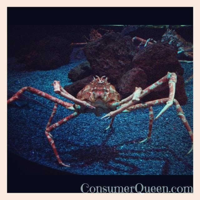 crab -Sevierville