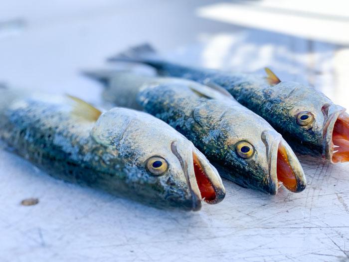 Caught 3 Fish Crystal River Fishing