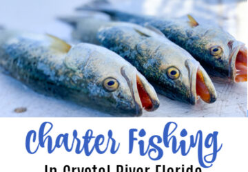 crystal river fishing