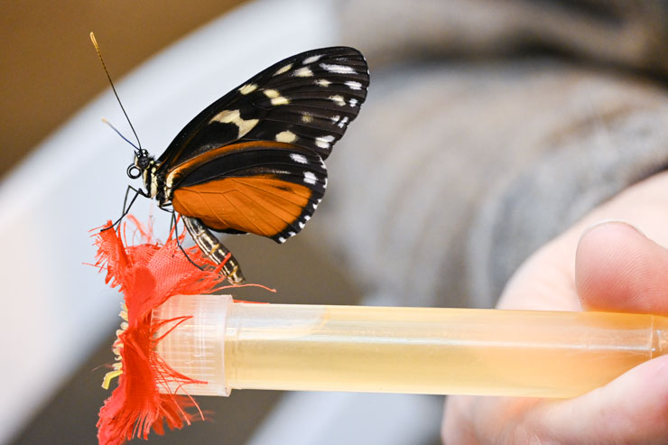 Monarch on feeder in my hand