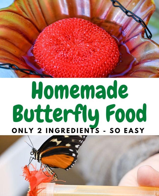Butterfly Palace: Homemade Butterfly Food