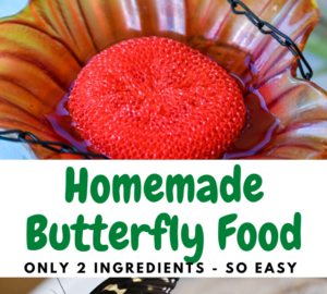 Homemade Butterfly Food