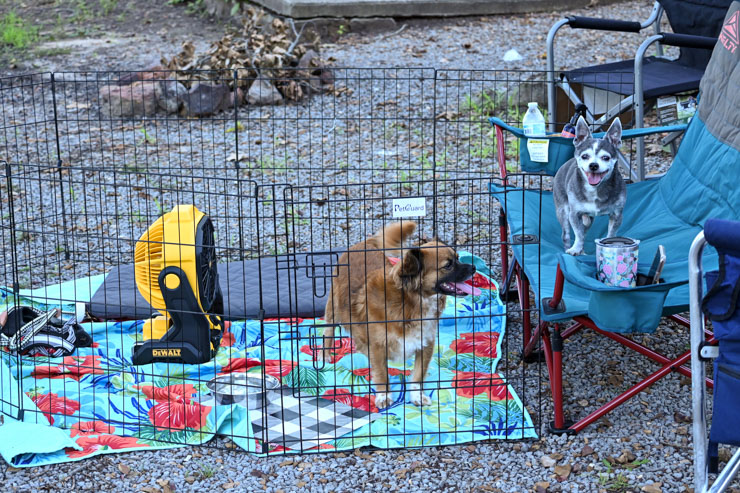 boomer and chloe camping
