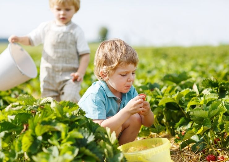 Pick Your Own Farms In Oklahoma – Complete List