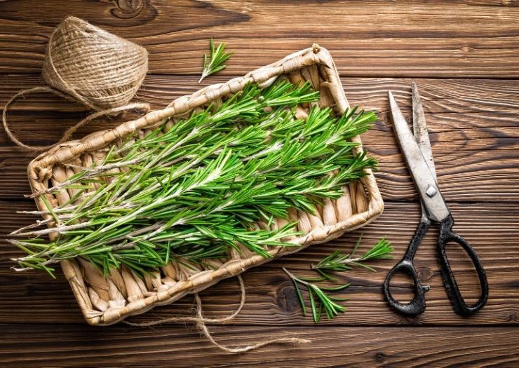 Wrapping Rosemary -how to get rid of mosquitos