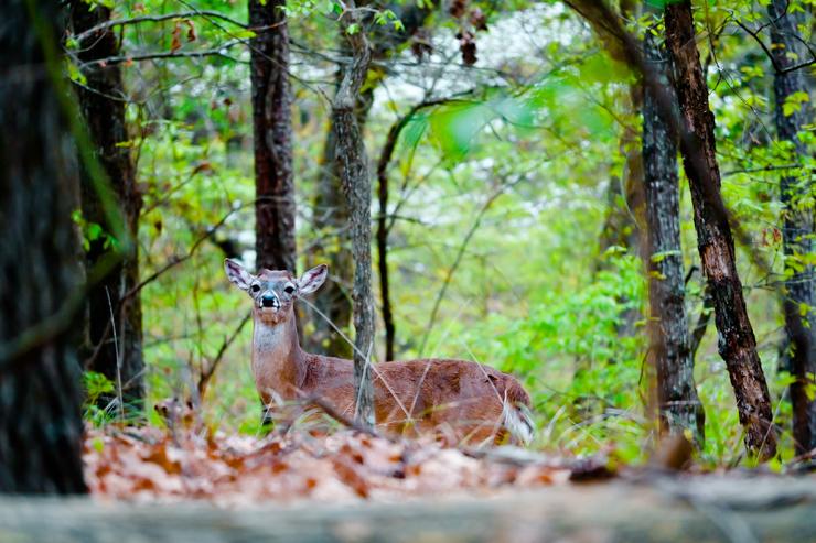 Deer Lake Deer Selfie